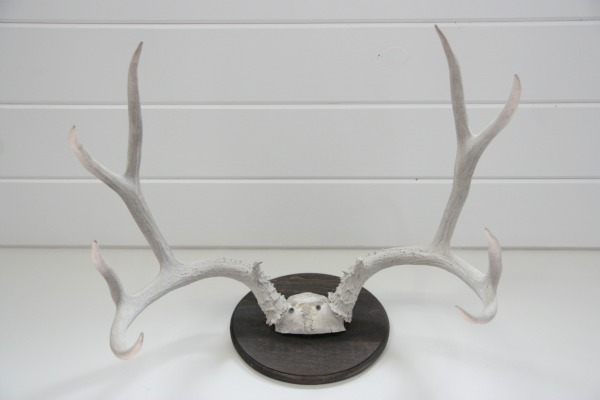 antlers 4
