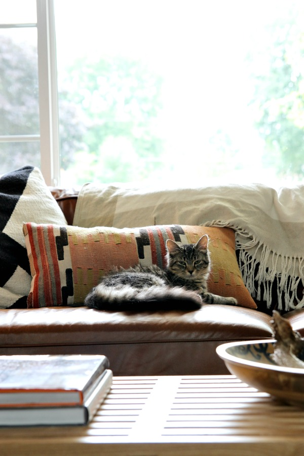 cat paraphernalia - leather sofa