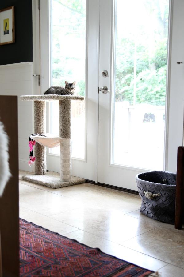 cat paraphernalia - stand